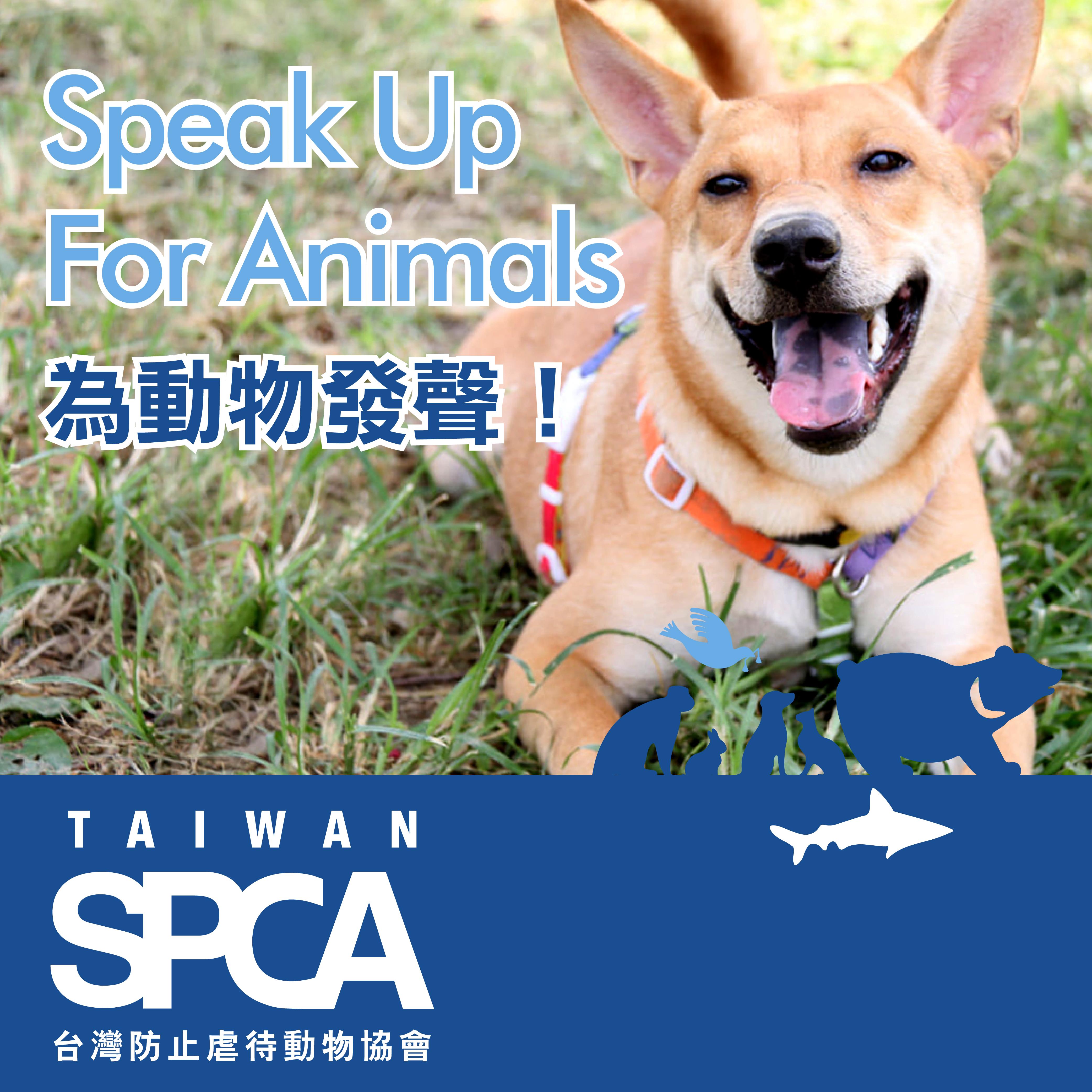 【社團法人台灣防止虐待動物協會】點點變愛心